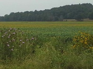 Fall field and flowers SM Sept 11, 2014